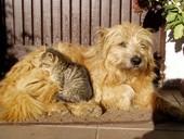 Cani gatti & altri animali
